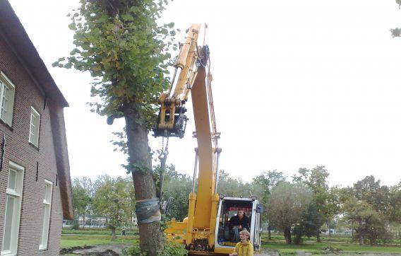 Verplanten boom Maarssen
